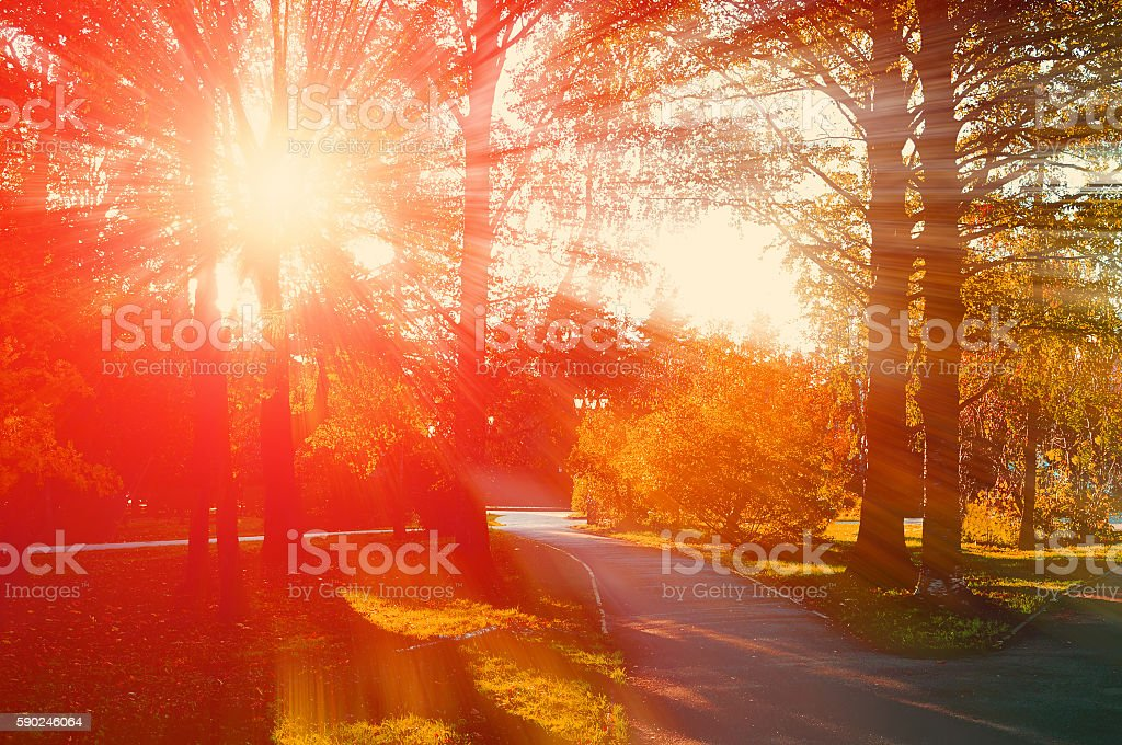 Park in autumn with fallen leaves - autumn landscape stock photo