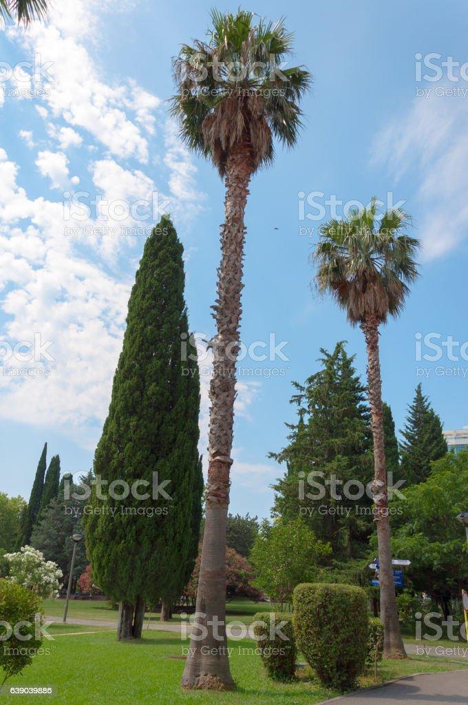 Park in Budva, Montenegro. Summer vacation at Mediterranian sea stock photo
