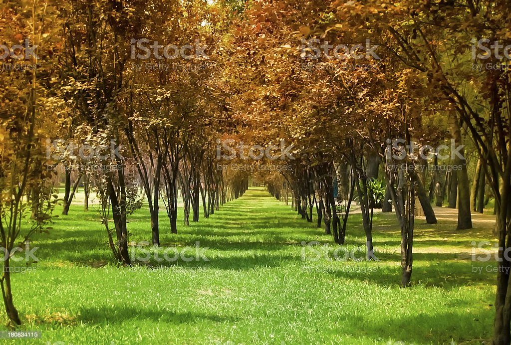 Park in fall royalty-free stock photo