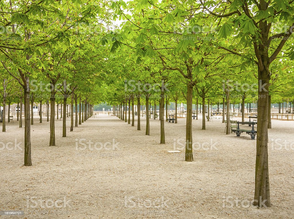 Park in spring royalty-free stock photo