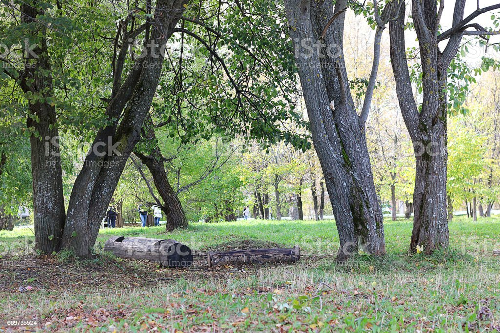 park in the city, young sprouts of trees in spring stock photo