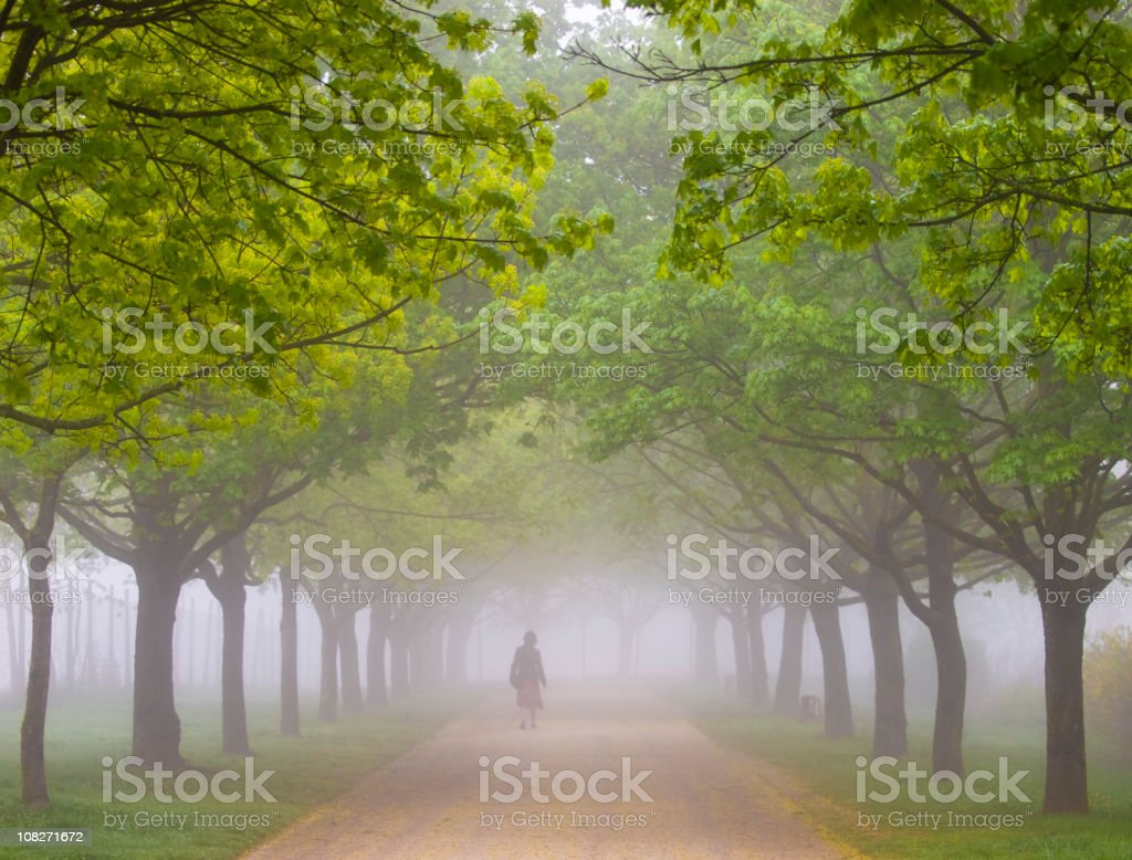 Park in the fog royalty-free stock photo