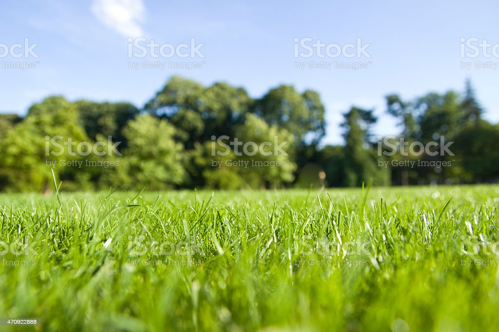 park lawn stock photo