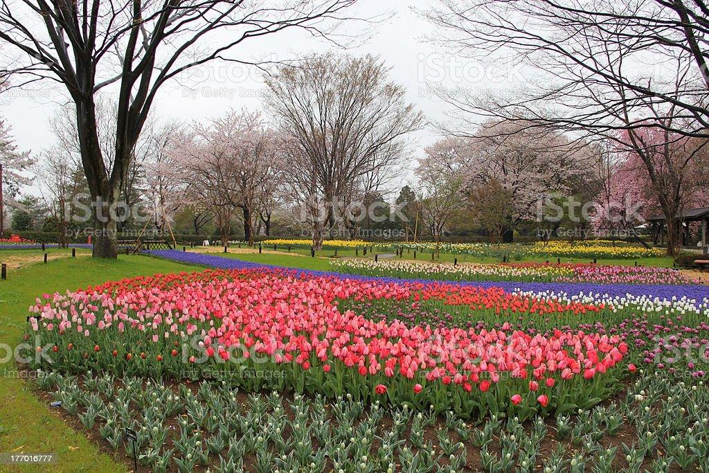 Park of the rainy day royalty-free stock photo