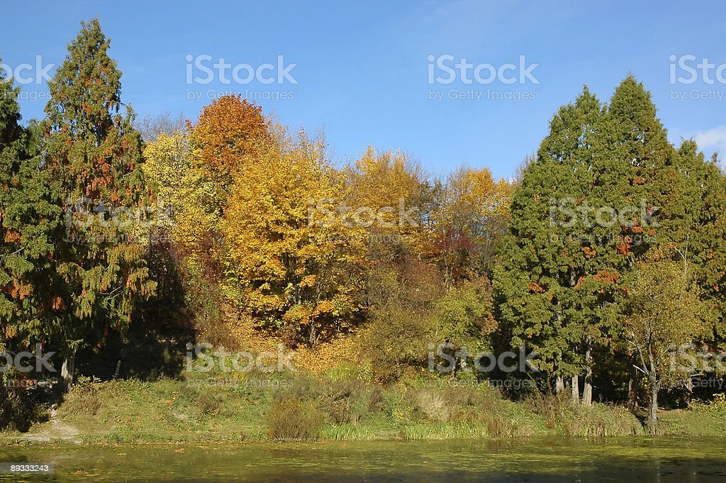 Park on coast of picturesque lakeAutumn wood and his reflection royalty-free stock photo