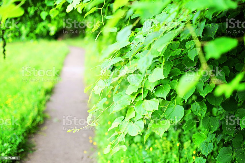 Park pathway royalty-free stock photo