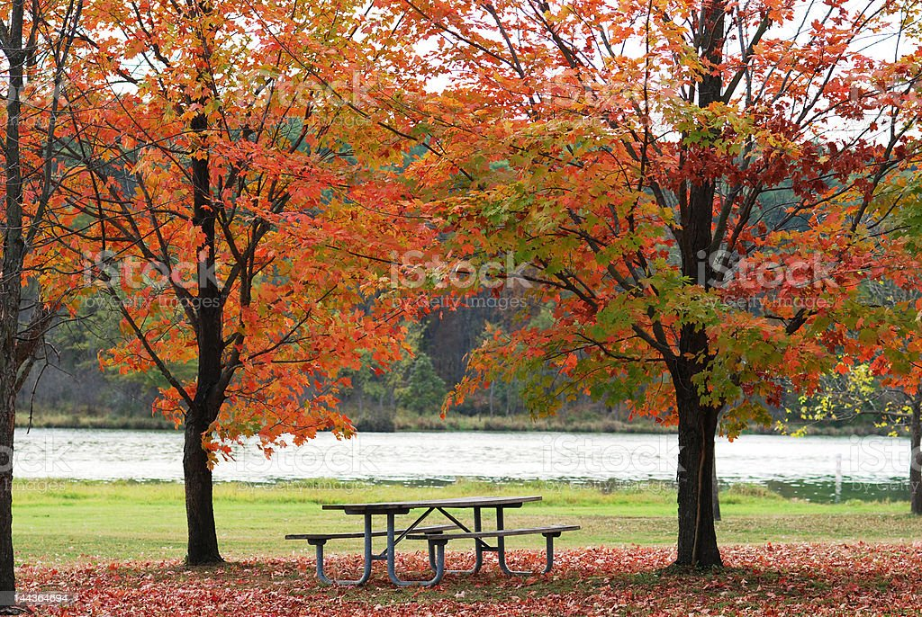 Parque mesa de piquenique no outono foto royalty-free