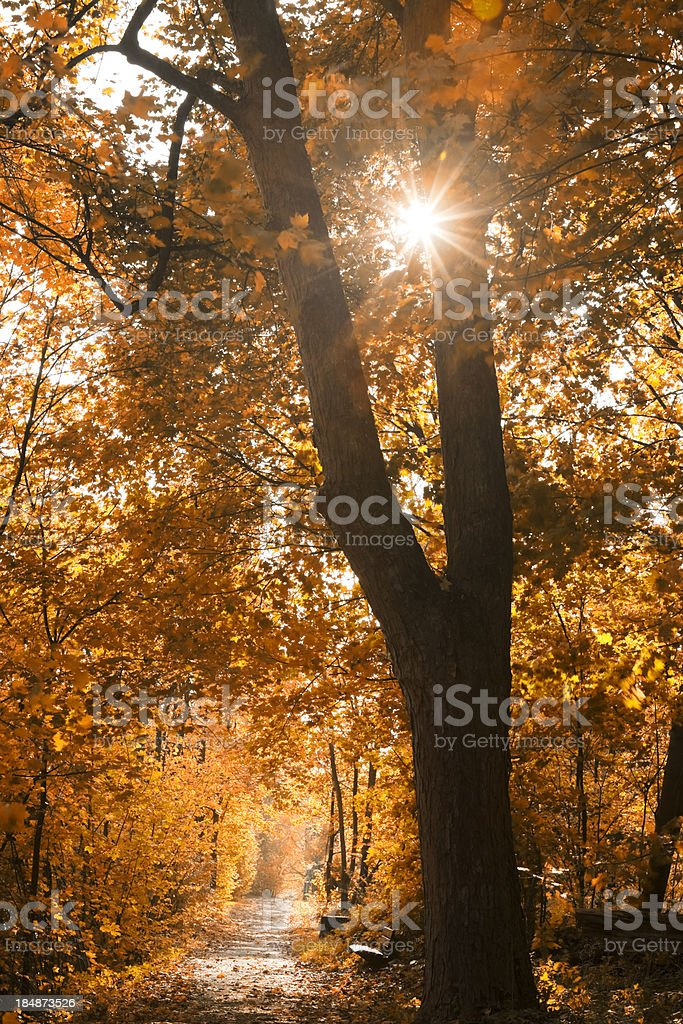 Park Road in Autumn royalty-free stock photo