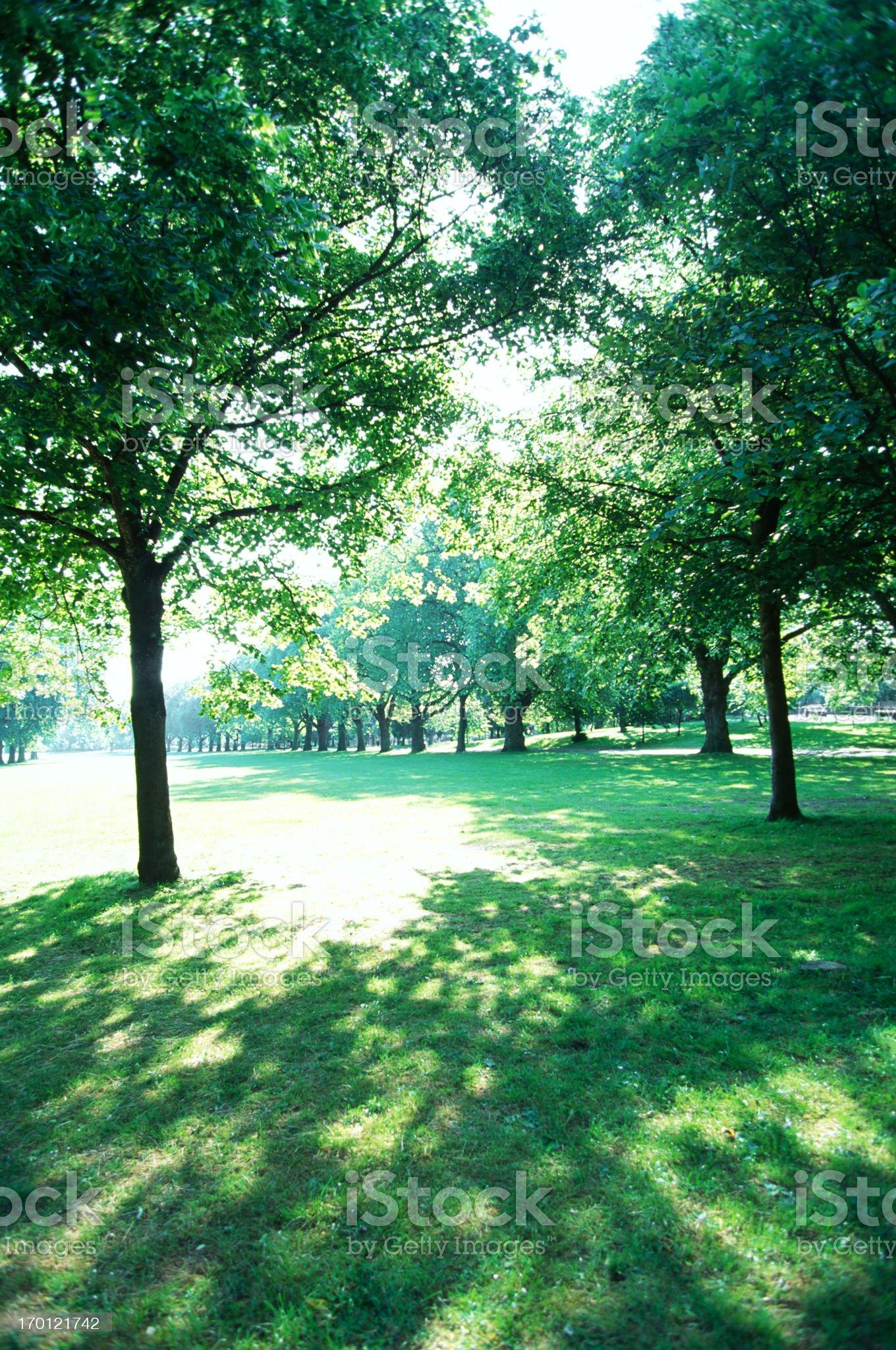 Park Trees royalty-free stock photo