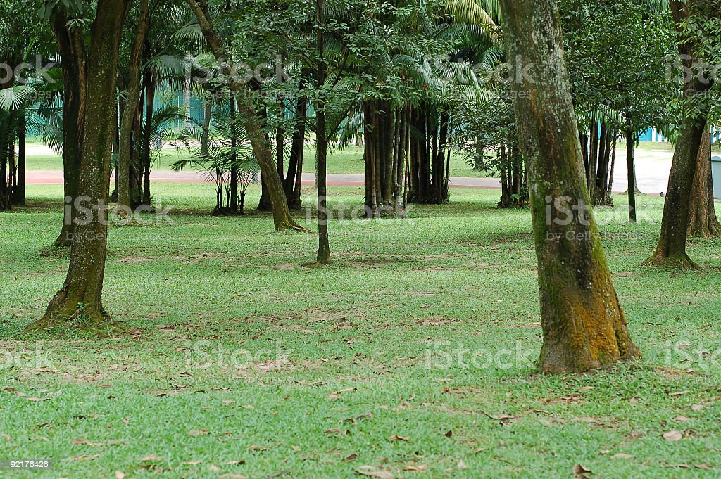 Park view stock photo