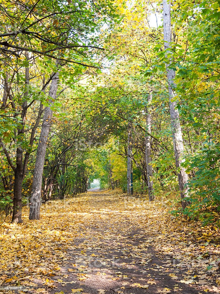 Park way lined by trees stock photo