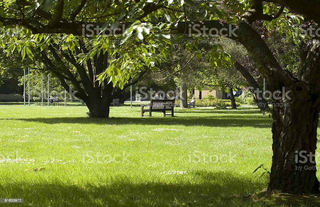 park with beautiful old trees stock photo