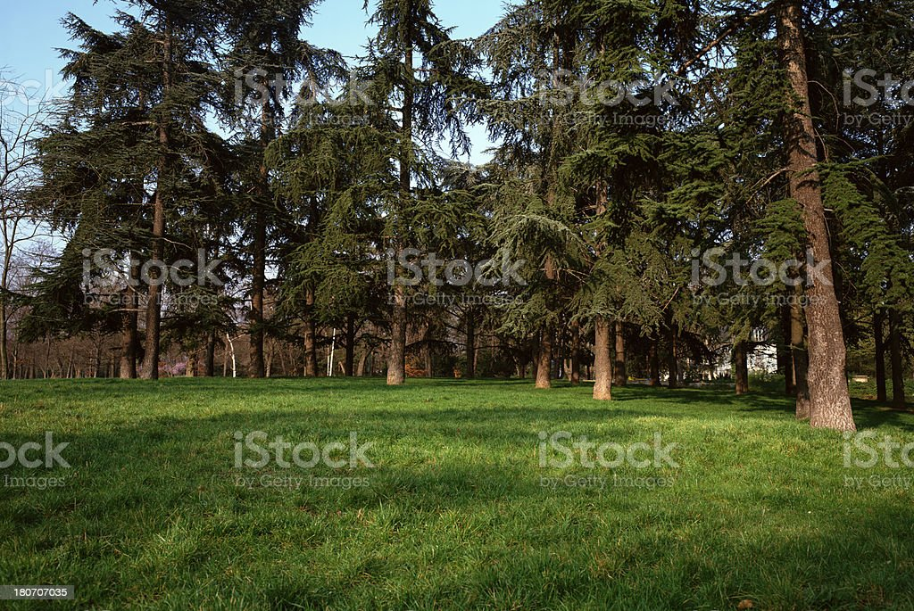 Park with green lawn and trees royalty-free stock photo