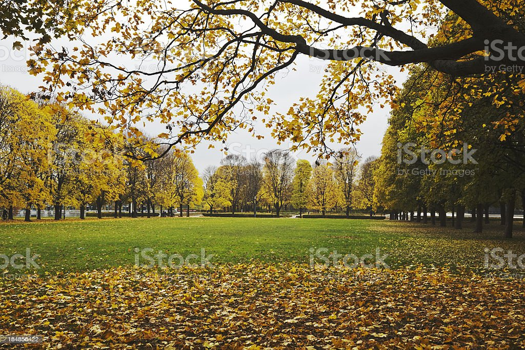 Park with  green lawn. royalty-free stock photo