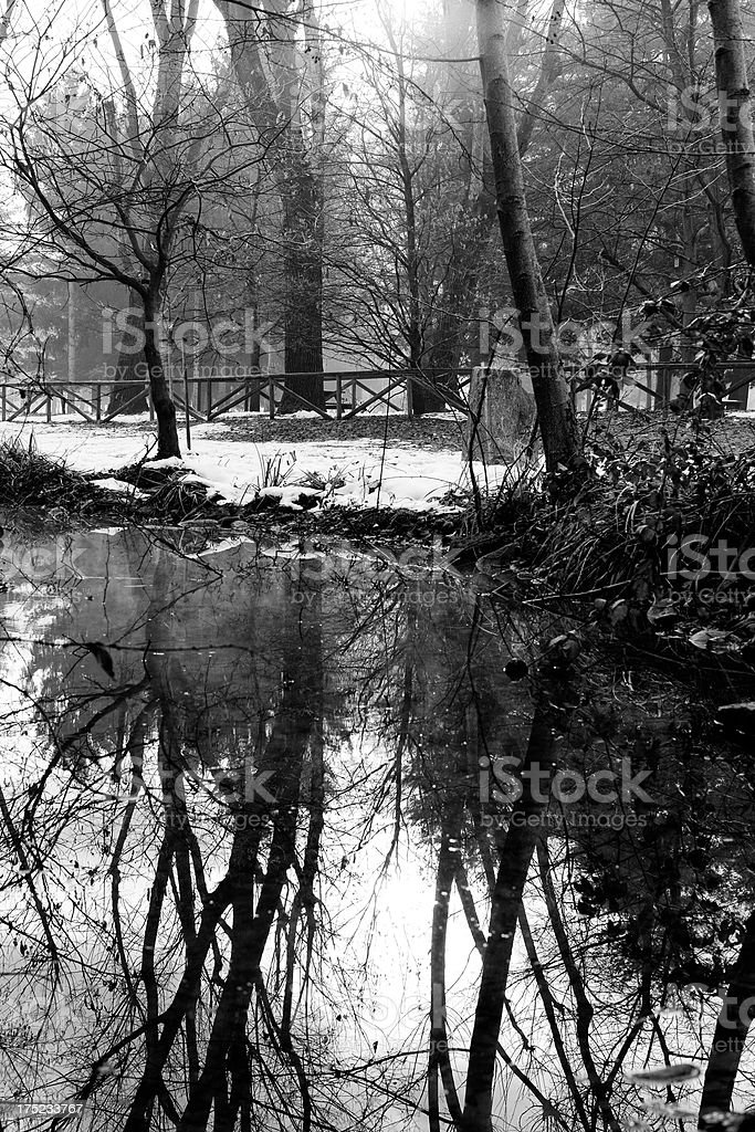 Park with Standing Water. Black and White royalty-free stock photo