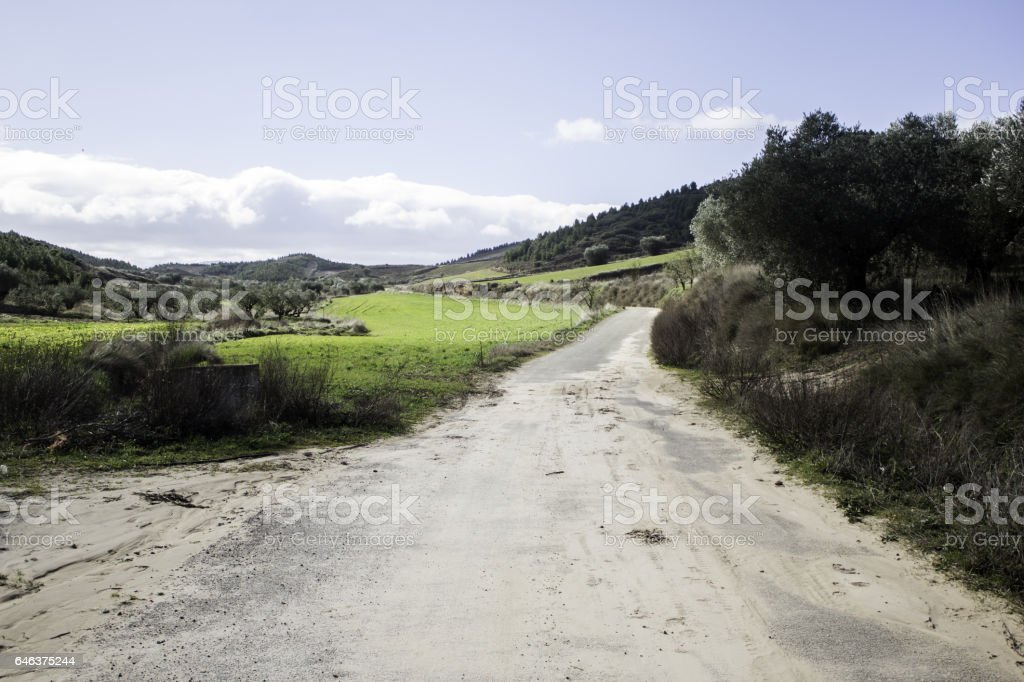 Park with trees and road stones, natural stock photo