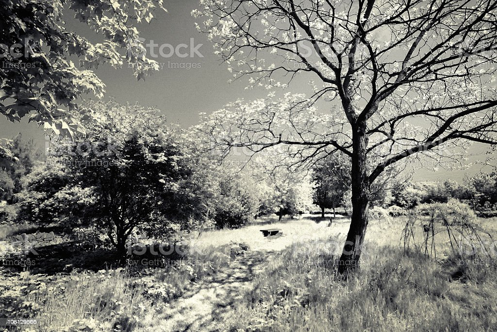 Park with Trees, Flowers, Black and White Toned royalty-free stock photo