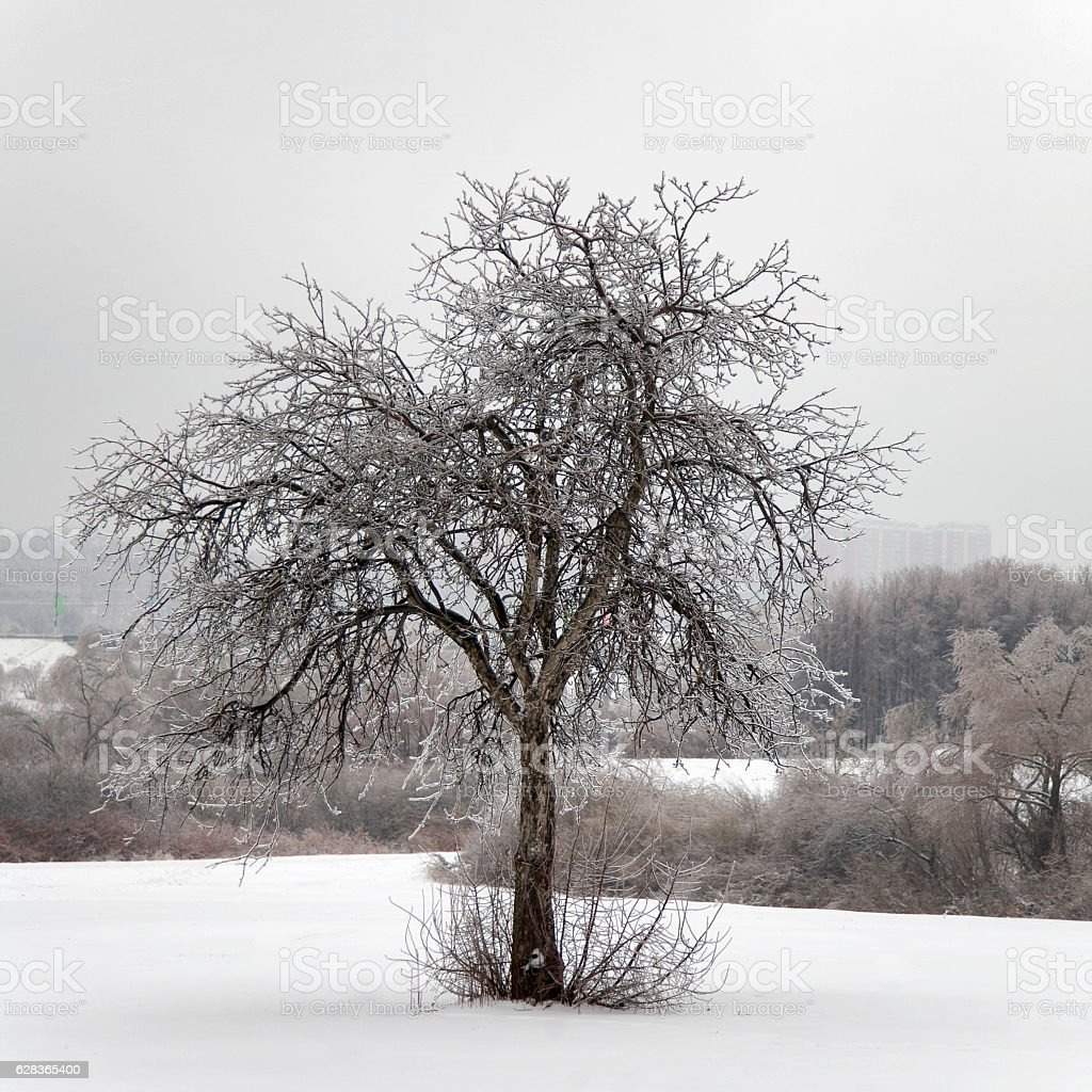park with  trees in ice stock photo