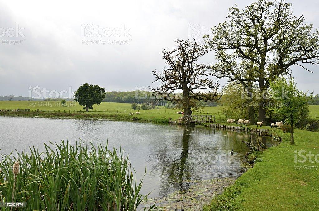 parkland. royalty-free stock photo