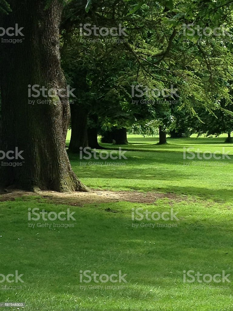 Parkland stock photo