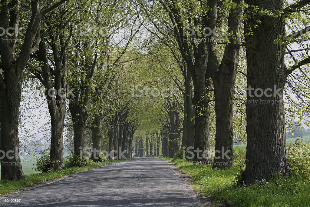 parkway in spring. royalty-free stock photo