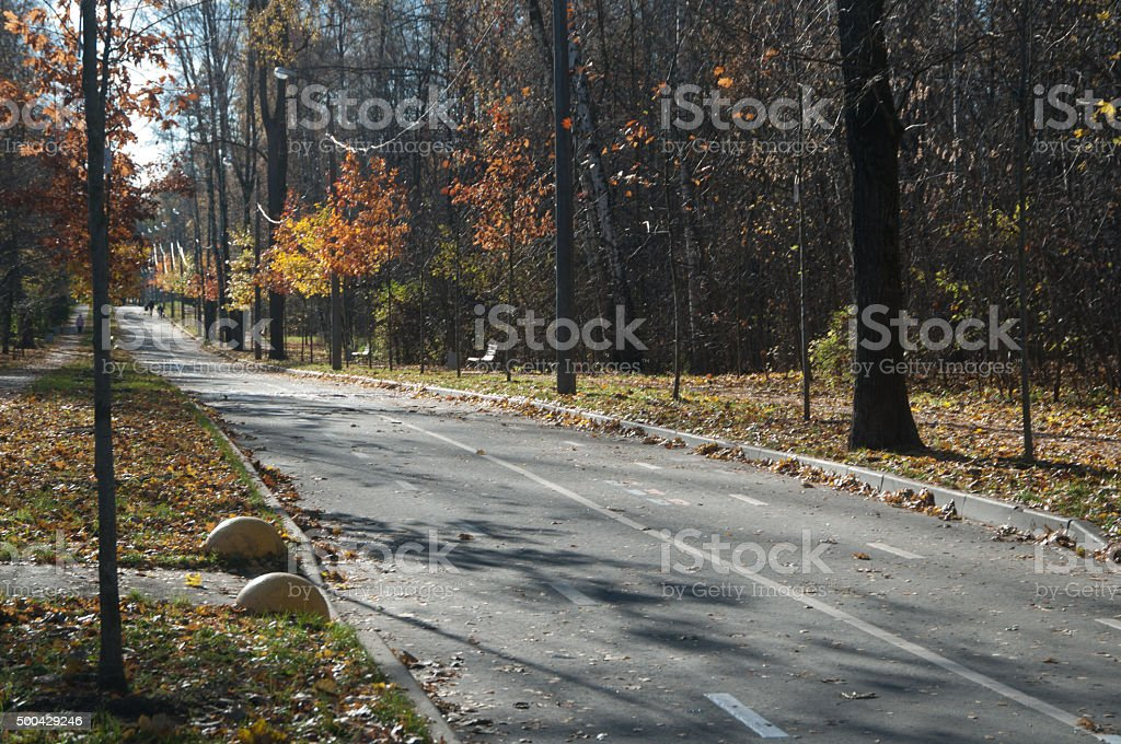 Parkway of young oaks stock photo