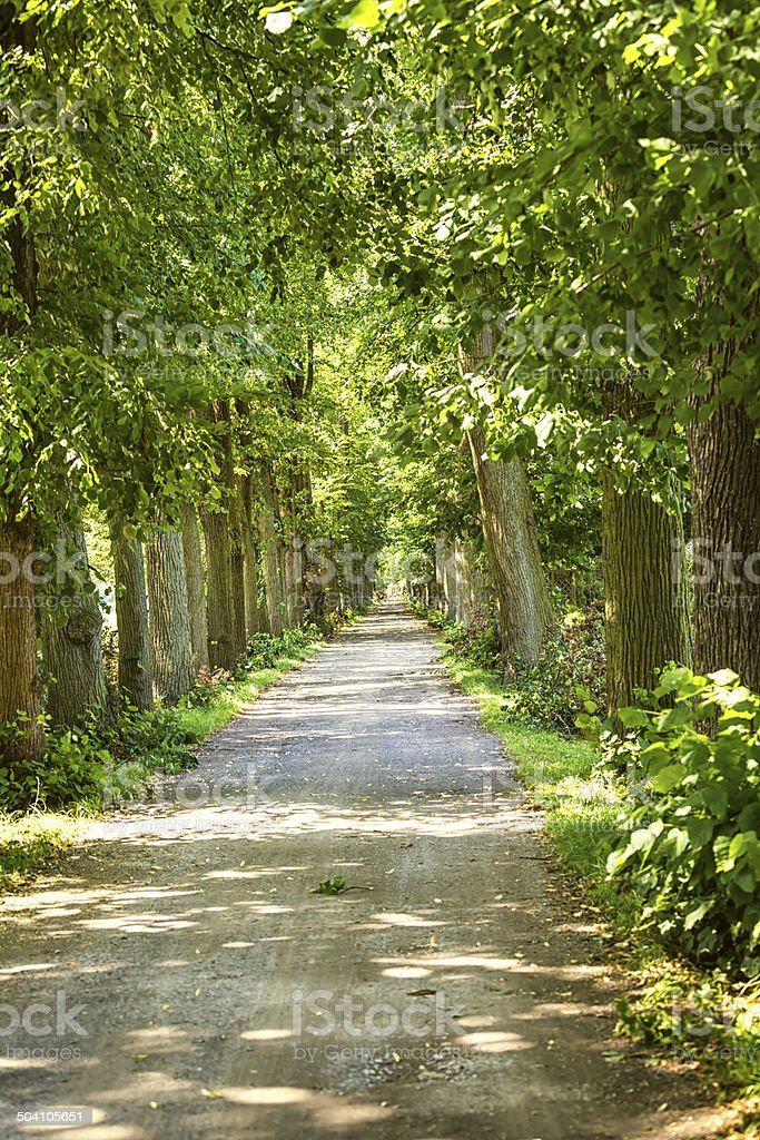 Parkway with trees stock photo