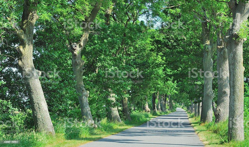 Parkway,Ruegen Island,Germany stock photo