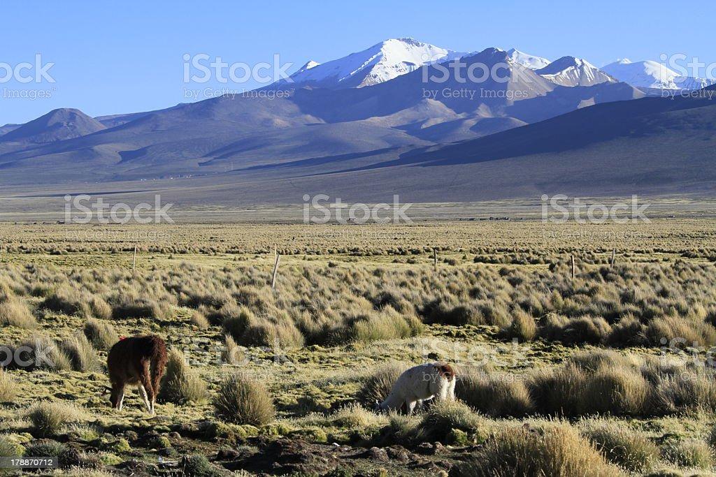 Parque Nacional Sajama royalty-free stock photo