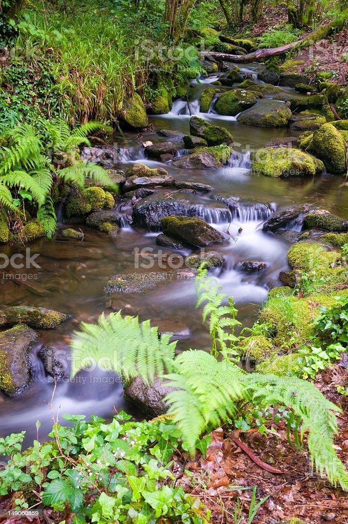 Parque Natural Fraga do Eume - Galicia (España) royalty-free stock photo