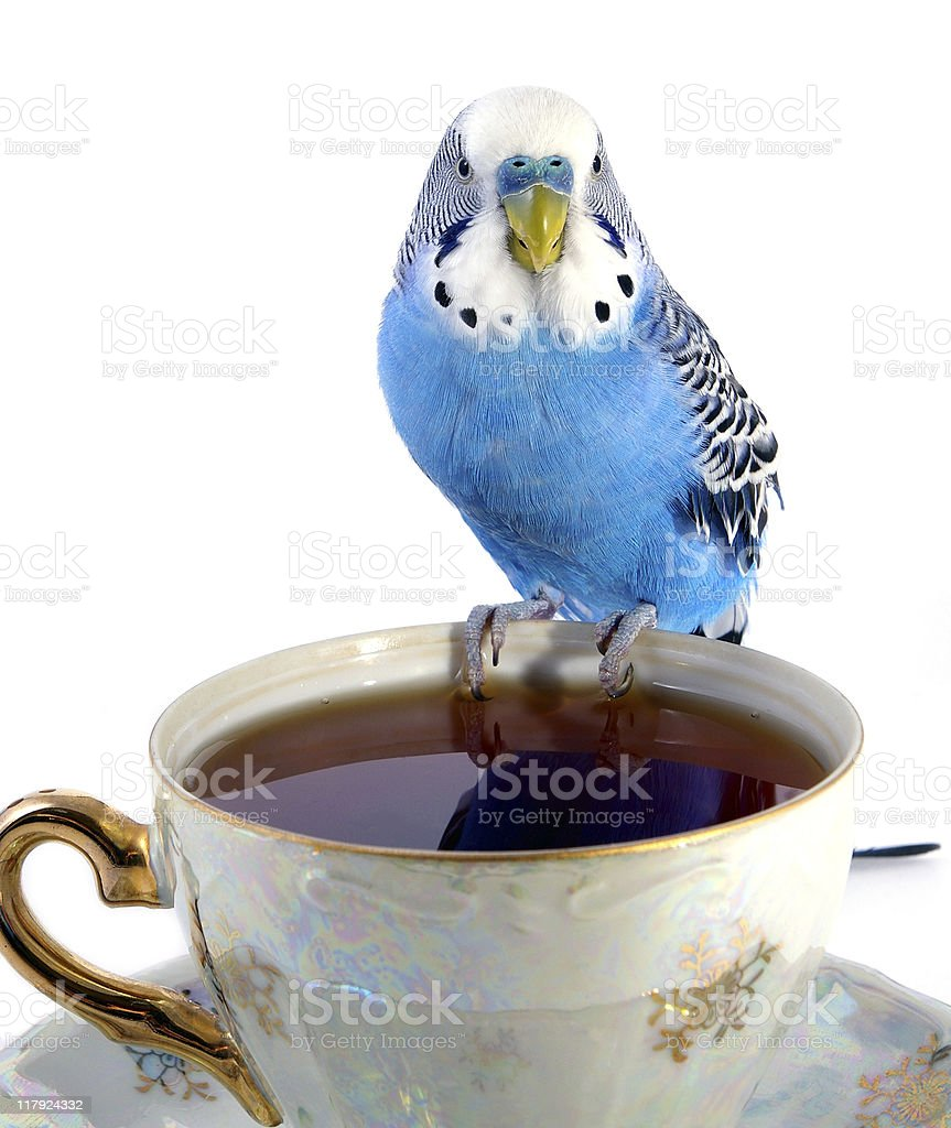 Parrot and cup with tea royalty-free stock photo