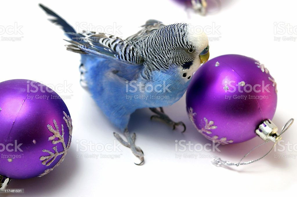 Parrot and fir tree new year's balls royalty-free stock photo