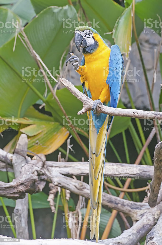parrot bird sitting stock photo