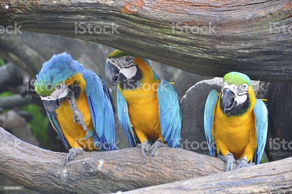 Parrot, birds, hookworm, Psittaciformes stock photo