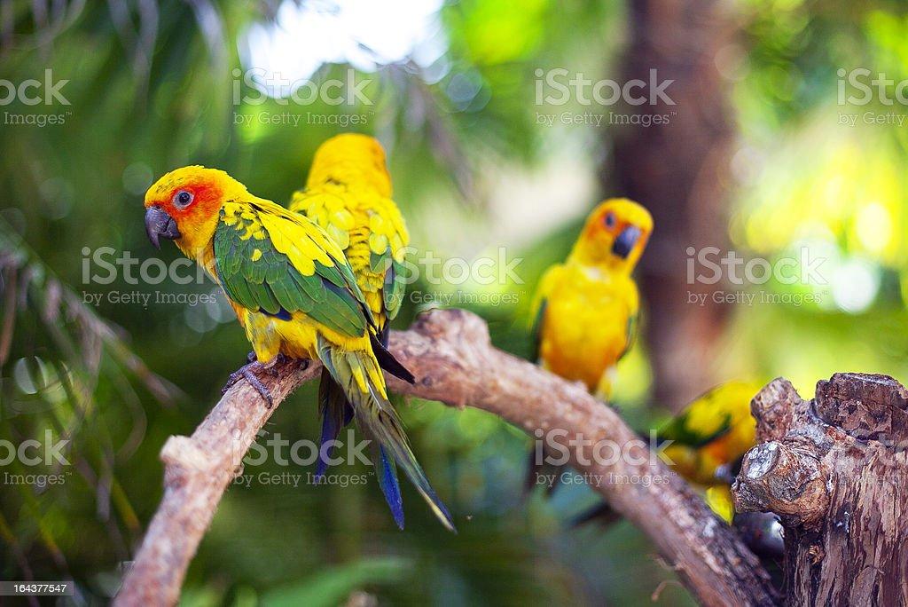Parrot family royalty-free stock photo