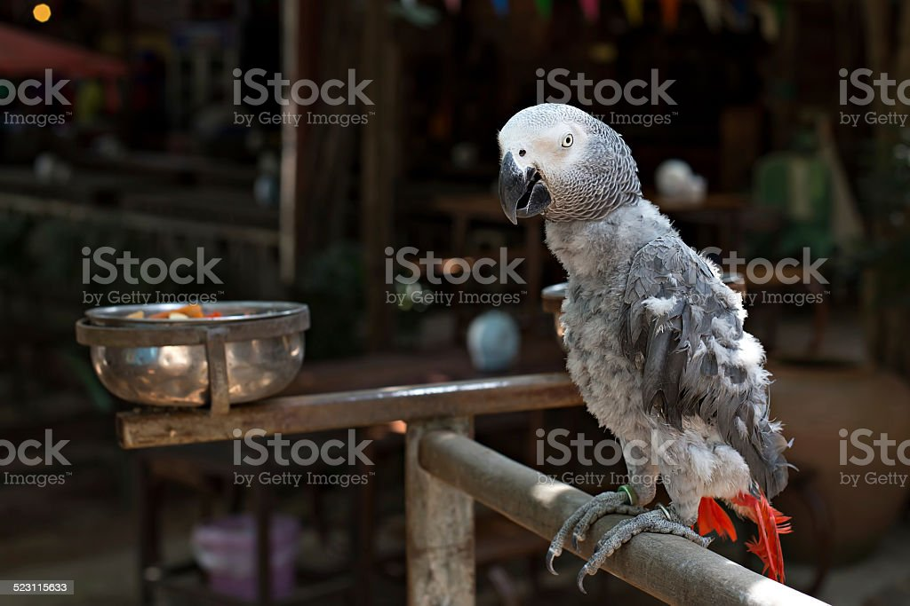 Parrot feather is dropped stock photo