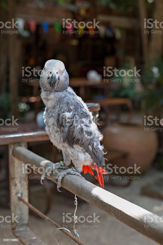 Parrot feather is unattractive stock photo