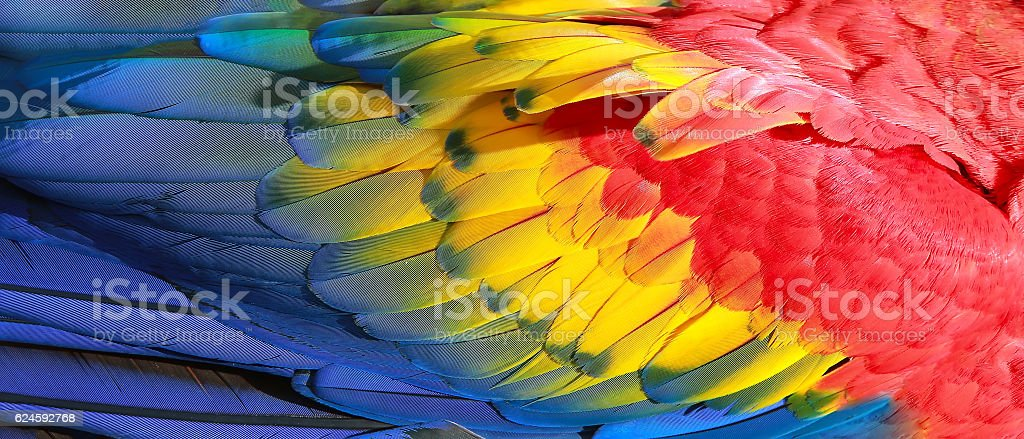Parrot feathers, red, yellow and blue exotic texture stock photo