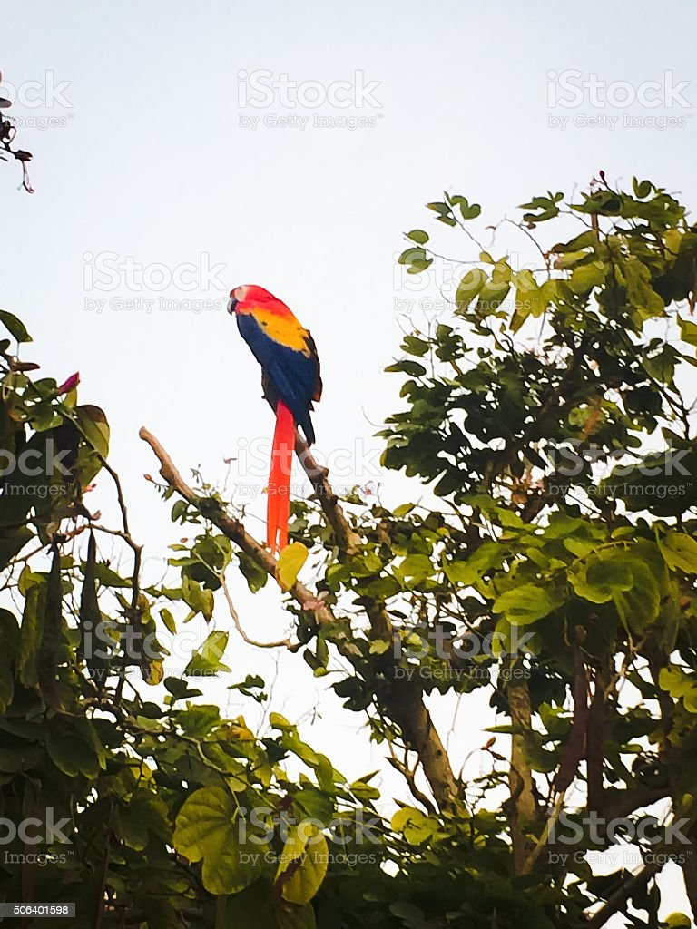 Parrot in a tropical tree stock photo
