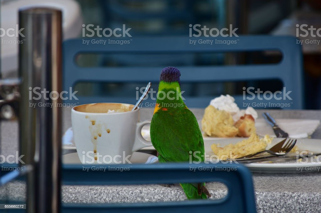 Parrot in cafe stock photo