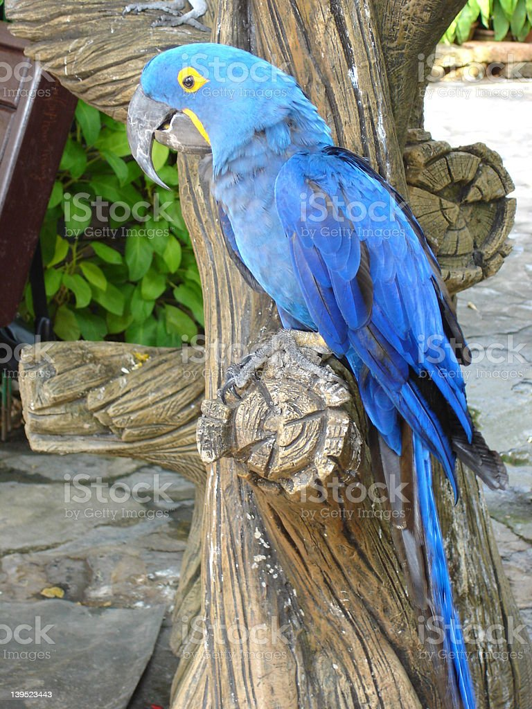 Parrot In Pattaya royalty-free stock photo