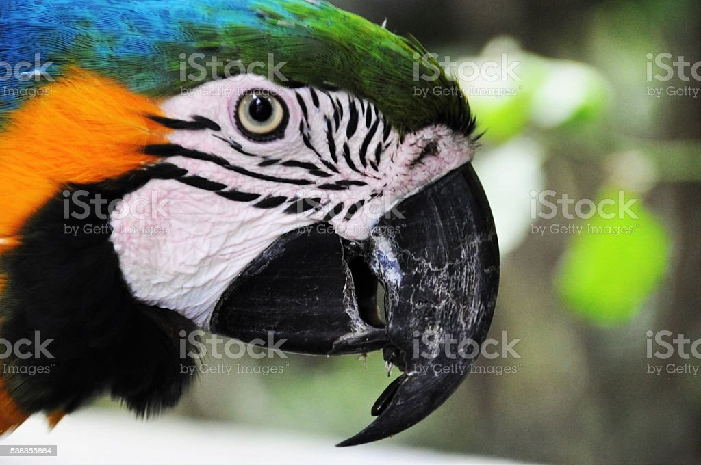 Parrot in South-Africa stock photo