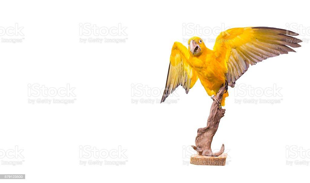 parrot macaw on white background Lizenzfreies stock-foto