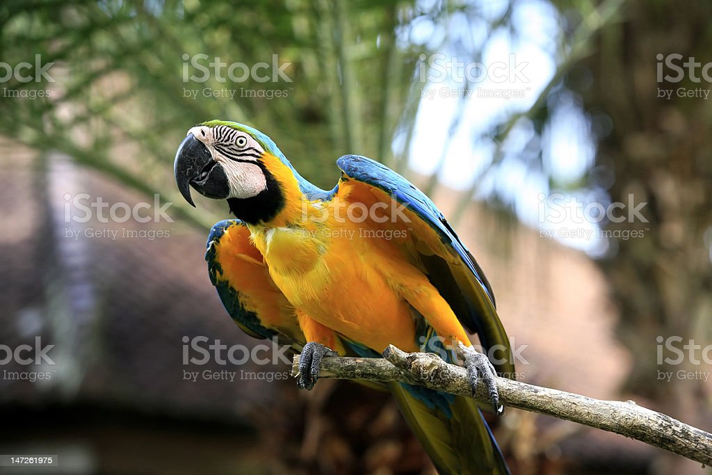 Parrot on a branch stock photo