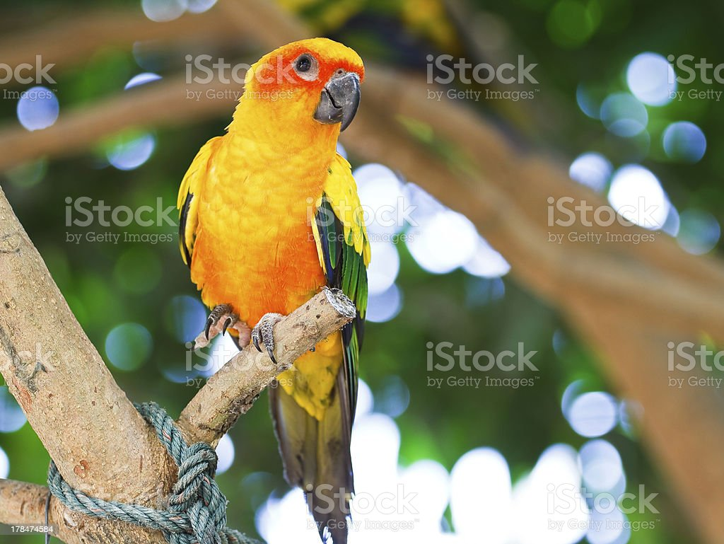 Parrot on the tree. royalty-free stock photo