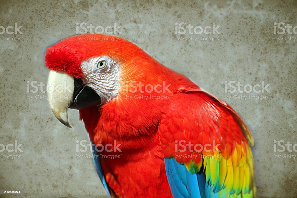 Parrot - Red Macaw stock photo