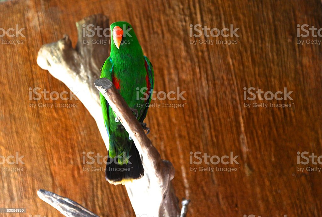 parrot sits on a tree branch stock photo