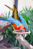 parrot,Bird,green,yellow,red,blue