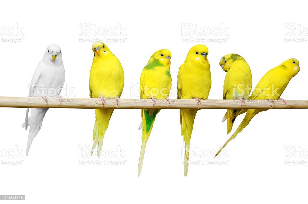 Parrots sit on a wooden stick stock photo