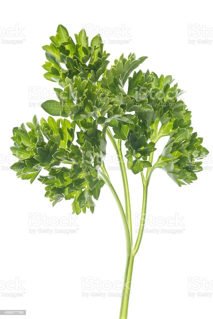 parsely leaves and stem stock photo